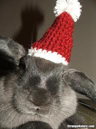 Does this hat make my ears look fat?