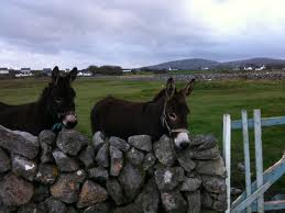 irishdonkeys