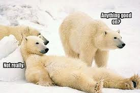 Polar bears after watching too many Christmas specials.