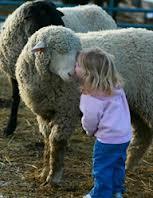 kindness sheep