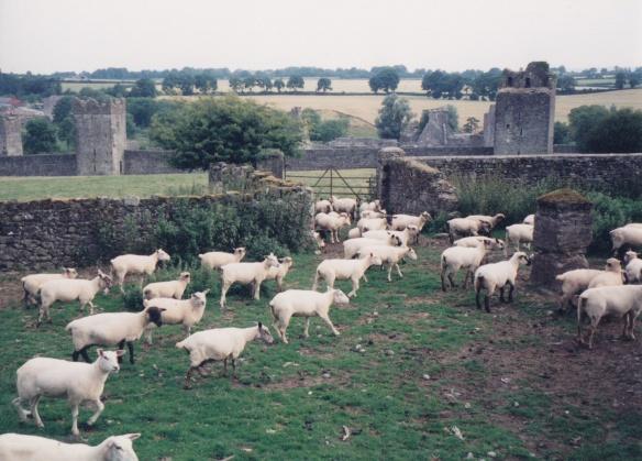 Ireland 2_0020