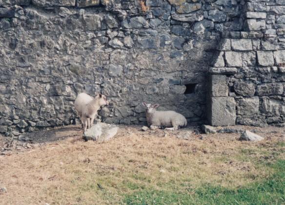 Ireland 2_0024