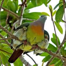 birds under wing