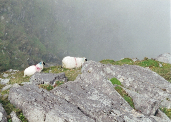 The Climbing Sheep of Carrantuohill