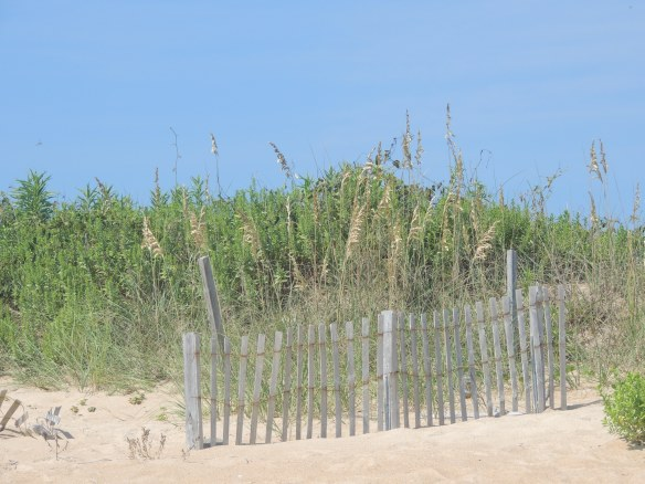 Outer Banks Dunes, North Carolina