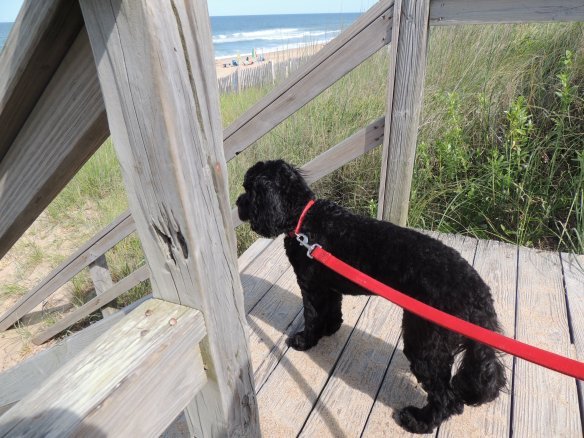 Our puppy's first glimpse of the ocean