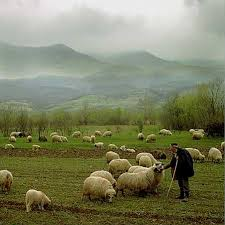 sheepand shepherd