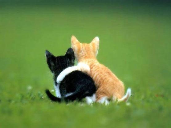 hugcats