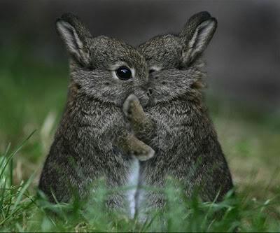 hugrabbits