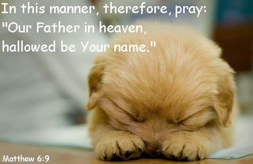prayingpuppy