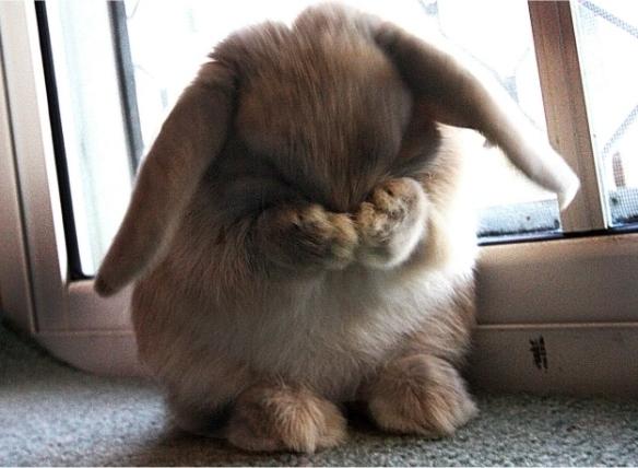 shyrabbit